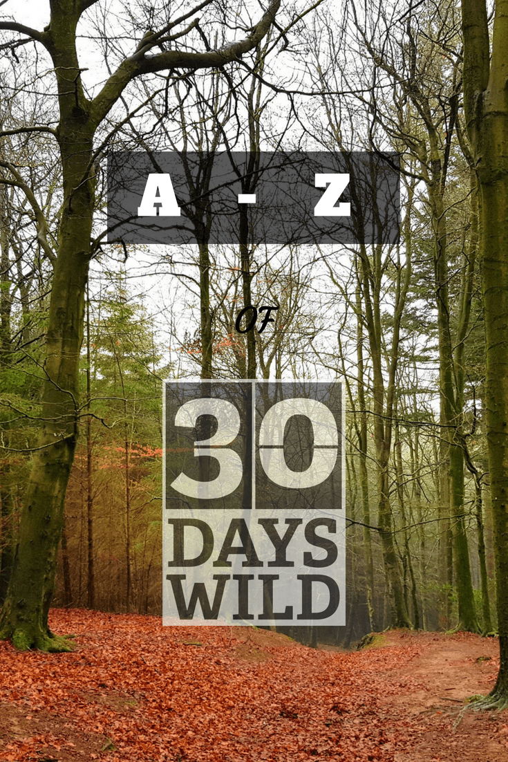 A - Z of 30 Days Wild text Forest of Dean image