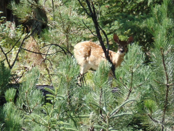 A fawn spotted up the hill at Mystic.
