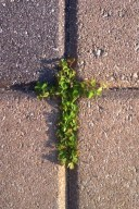 Clover- Taken outside of  church in Naples Florida 2014