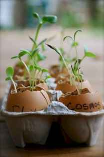 30 Brilliant DIY Egg Shell Seed Starters Crafts Ideas (22)