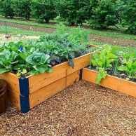 25 Easy DIY Vegetable Garden Small Spaces Design Ideas For Beginner (12)