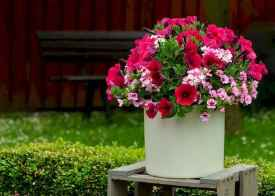 40 Beautiful Container Gardening Decor Ideas For Beginners (20)