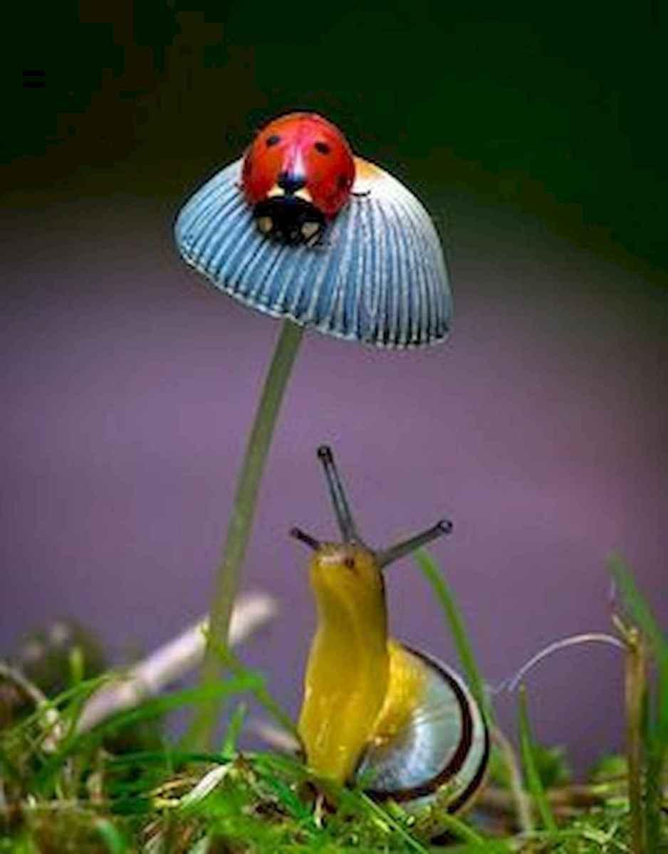 55 Creative Garden Art Mushrooms Design Ideas For Summer (17)