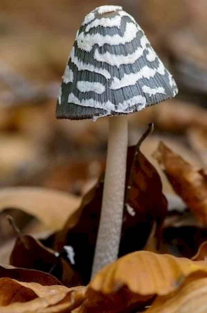55 Creative Garden Art Mushrooms Design Ideas For Summer (29)