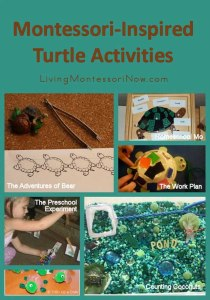Montessori-Inspired Turtle Activities