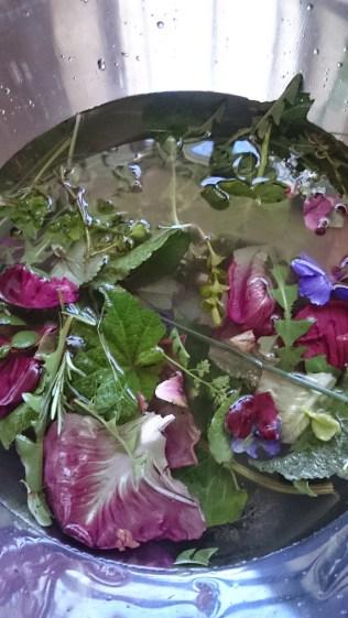 pickings for Back Yard Salad