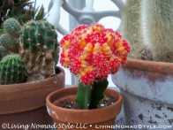 Conservancy Cactus 1