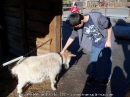 Ethan Petting Goats