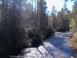 Little River At Hooker Falls