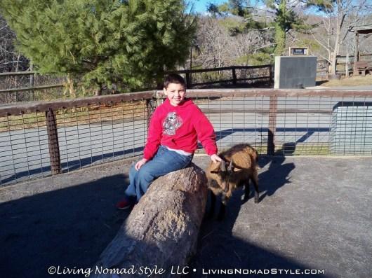 Trevor Petting Goats