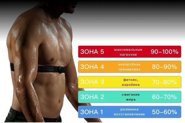 пульсовые зоны для похудения