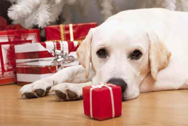free cheap and homemade gifts for pets living on the cheap