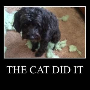 the cat did it
