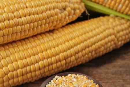 Easy recipes with cheap summer sweet corn