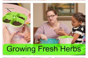 Growing Fresh Herbs In Your Kitchen or Garden