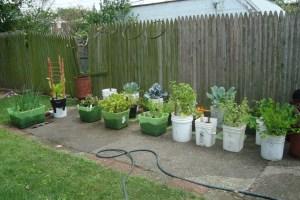growing gardens