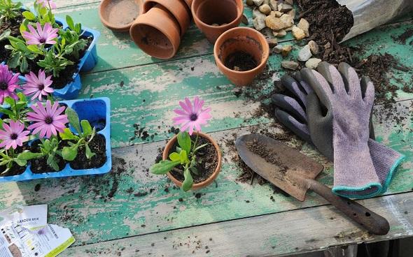 basic garden tools