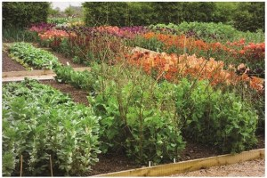 How To Plan The Perfect Vegetable Garden Layout