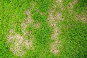 Can I Over Fertilise My Lawn?