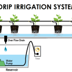 How Installing Drip Irrigation Can Improve Your Backyard