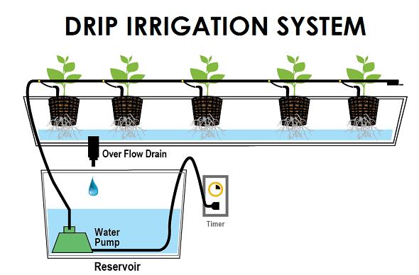 installing drip irrigation