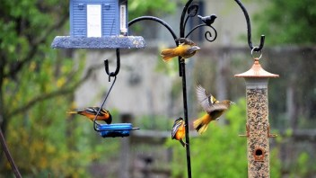 How To Attract Birds To Your Backyard