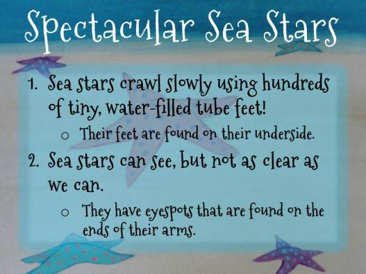 Sea stars fun facts 2