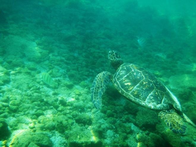 happy sea turtle nesting season!