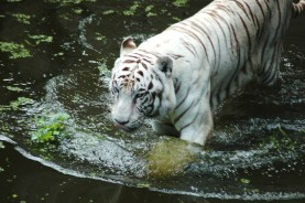 Pana'ewa Zoo