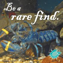 be a rare find