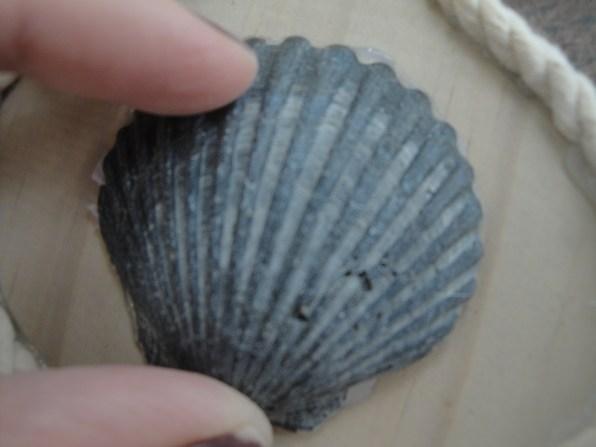 scallop shell ornament (3)
