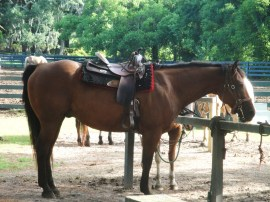 HHI horseback riding (7)