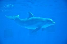 gulfarium-dolphins-2-800x533