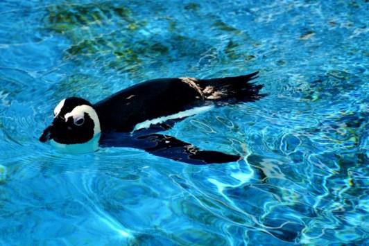 gulfarium-penguins-800x534