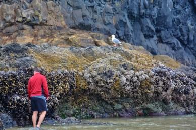 tide-pools-at-haystack-rock