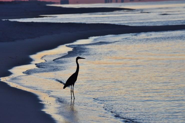 heron-at-sunrise