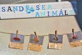 Sand and Sea Animals Display Board 3