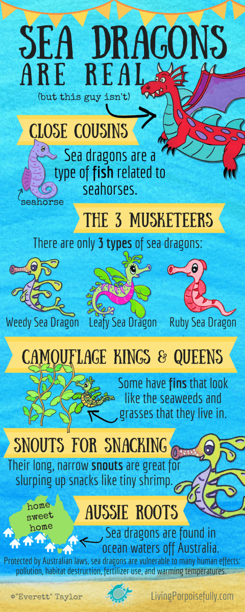 Sea Dragons are Real! (Infographic) – Living Porpoisefully