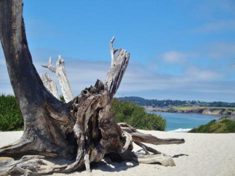 carmel beach 2
