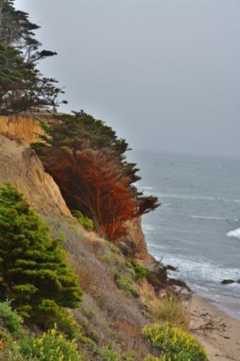 cliffs along the beach at Fitzgerald Marine Reserve