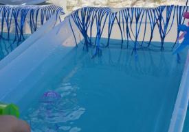 jellyfish races
