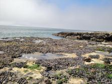natural bridges tide pooling (2)