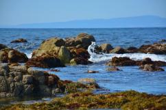 pacific grove marine gardens 2