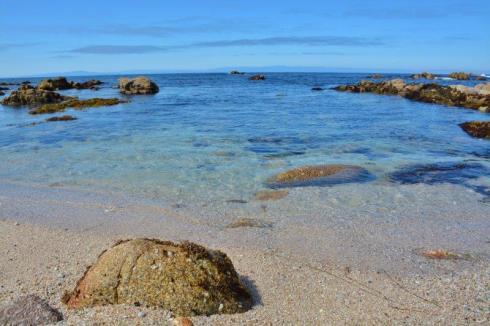 pacific grove marine gardens