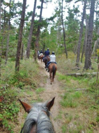 pebble beach horseback riding 2