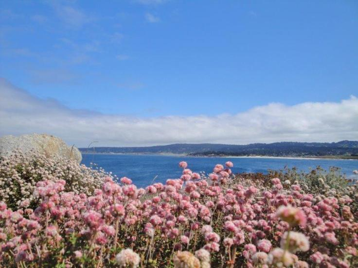 point lobos flowers
