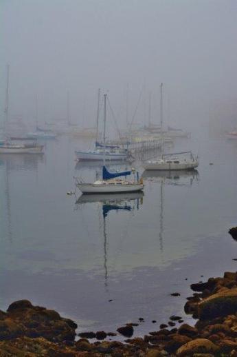 Monterey Bay - marina
