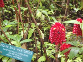 Hawaii's Tropical Botanical Gardens - A MUST SEE!
