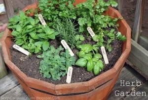 HerbGarden