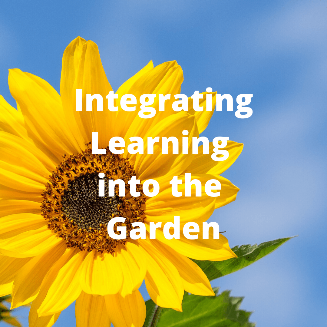 Vegetable Gardening Course - Learning in the garden